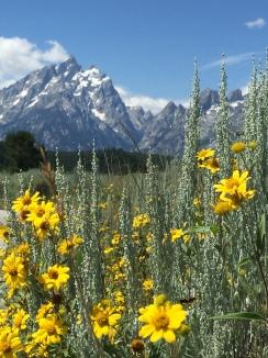 Grand Teton National Park, Outdoor Recreation History